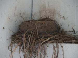 June 18 - nest