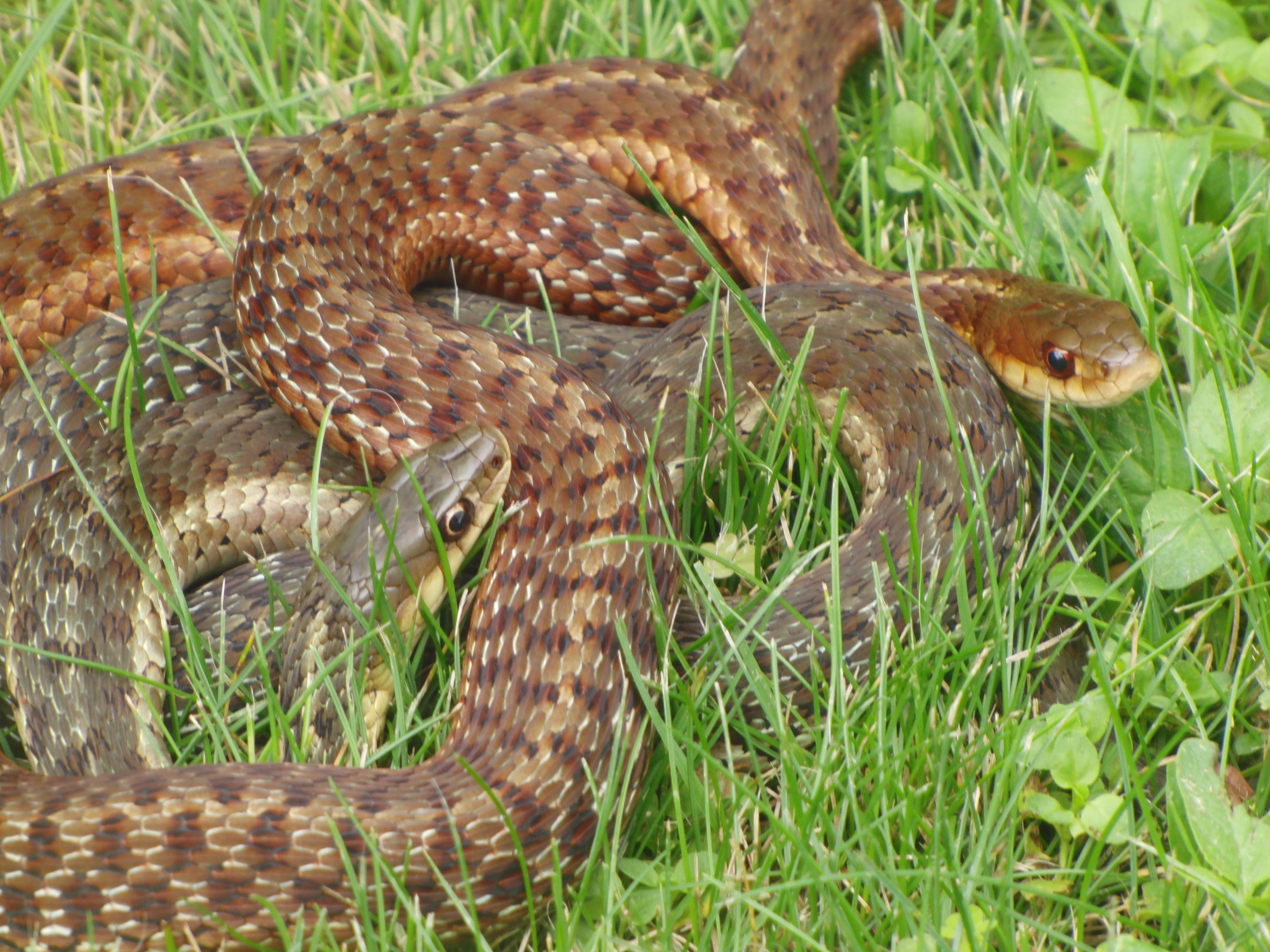 Snakes in the grass | witches whiskers