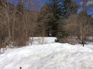 April 15 view towards the pond
