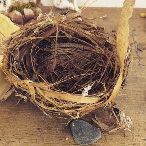 We found this little chickadee nest on the path to school today